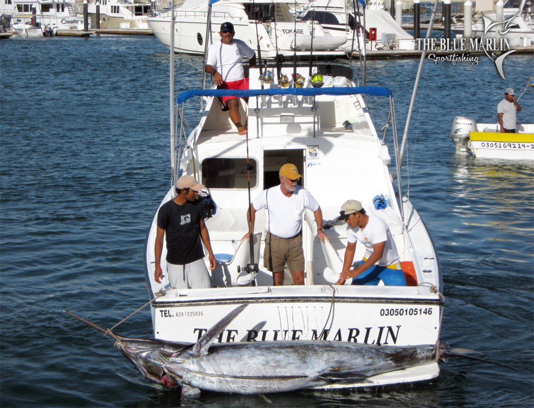 Gallery the blue marlin sportfishing cabo san lucas mexico for Marlin fishing cabo